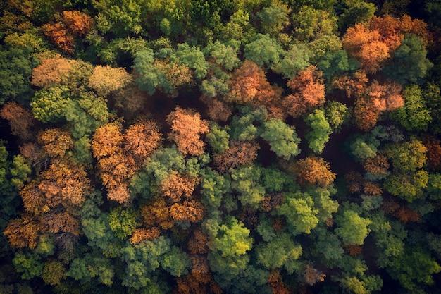 Jesień las widok z góry