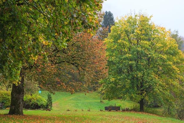 Jesień las z dużymi drzewami