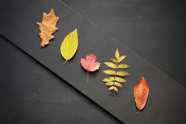 Jesień leżała płasko. kompozycja różnych kolorowych opadłych liści leżących w linii ukośnej