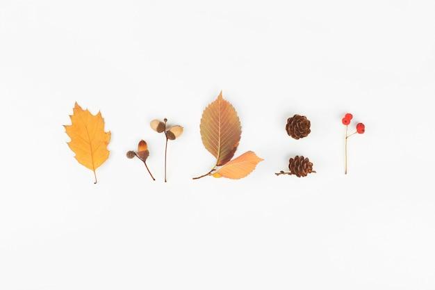 Jesień leżała płasko. szyszki, żołędzie, jagody, liście na białym tle