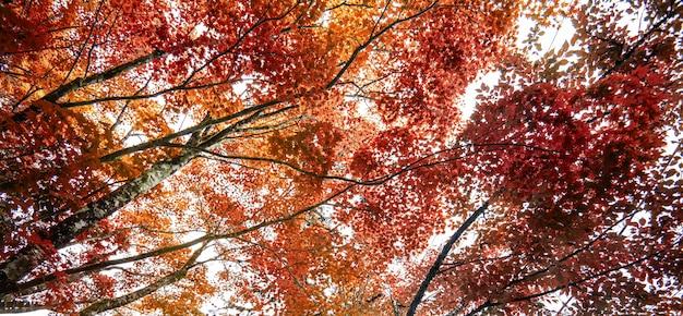 Jesień liść klonowy natura świeża