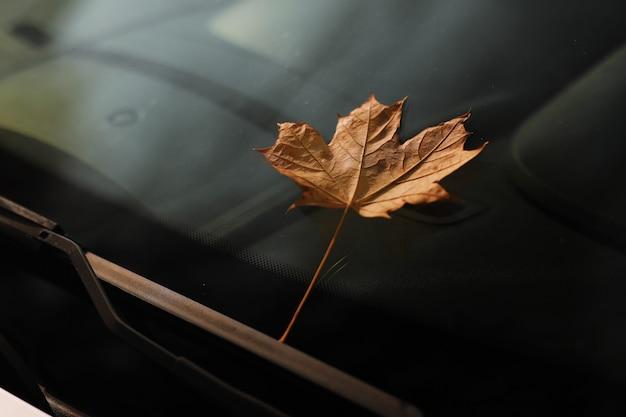 Jesień liść na przedniej szybie samochodu. żółty liść klonu na szkle
