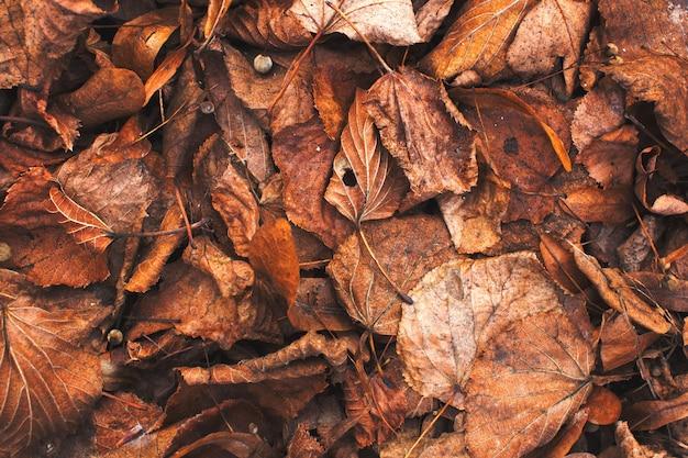 Jesień liści stary spadać tło tekstura