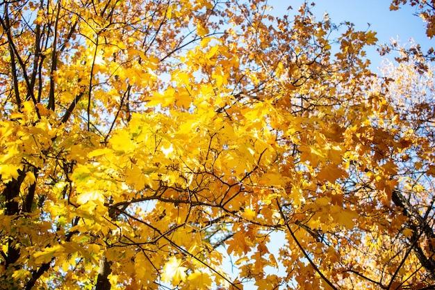 Jesień liście z niebieskim niebem
