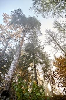 Jesień mglisty las z gałęzi drzew o żółtych liściach