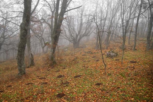 Jesień mglisty las z opadłymi liśćmi.
