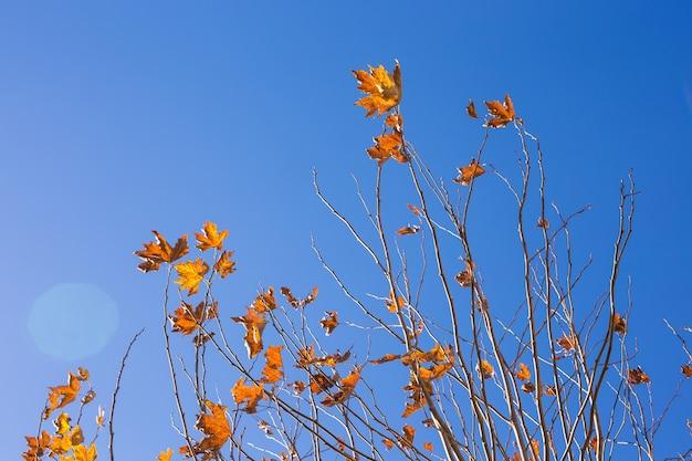 Jesień natura jesienne drzewo pozostawia tło nieba