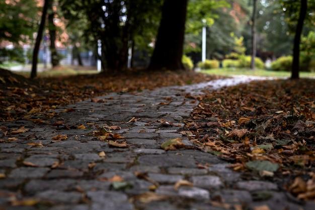 Jesień opadłych liści na ścieżce spacerowej w parku miejskim