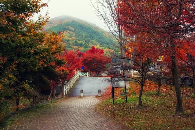 Jesień park w kawaguchiko z mgłą