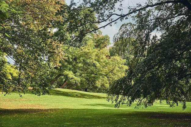Jesień park w słoneczny dzień