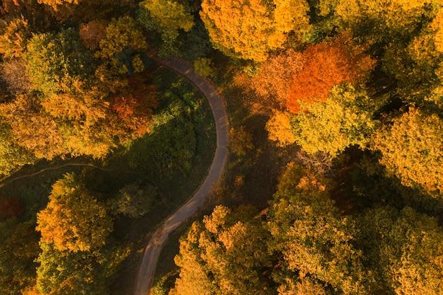 Jesień park z alei drona powietrznym widokiem. kolorowy krajobraz jesień