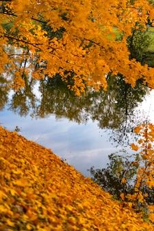 Jesień park z jeziorem