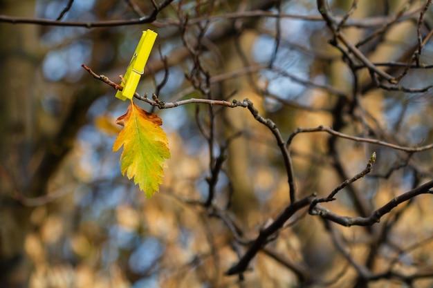 Jesień pomarańczowy liść na nagiej gałąź z clothespin na spadku lasu tle
