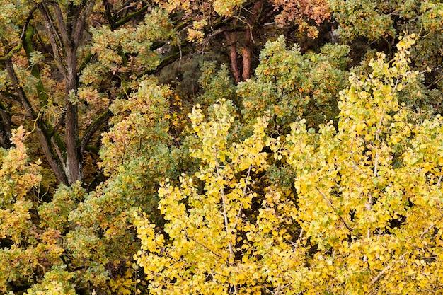 Jesień pożółkłe liście w lesie
