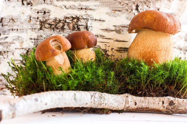 Jesień stylizowana kompozycja białych grzybów na tle kory brzozy.
