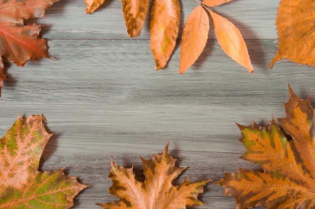 Jesień susi liście na popielatym drewnie