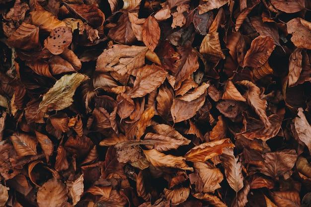 Jesień tło kolorowych i suchych opadłych liści w ziemi z markotnym filtrem