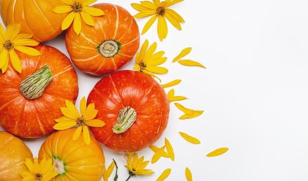 Jesień tło z żółtymi kwiatami i pomarańczowymi dyniami. układ ofert sezonowych i kart świątecznych, widok z góry.