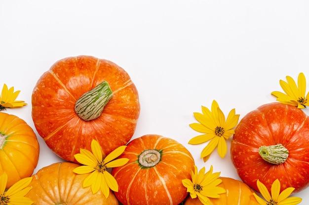 Jesień tło z żółtymi kwiatami i pomarańczowymi dyniami.