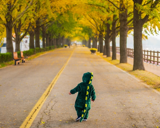 Jesień w asan gingko tree road w seulu, korea południowa.