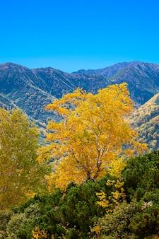Jesień w górach. piękny jesienny widok na półwysep kamczacki