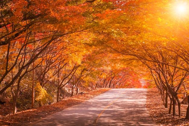 Jesień w korei i klonowy drzewo w parku, naejangsan park narodowy w jesień sezonie, południowy korea