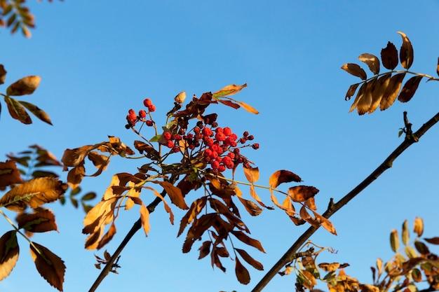 Jesień w parku, drzewa i liście jesienią, lokalizacja - park,