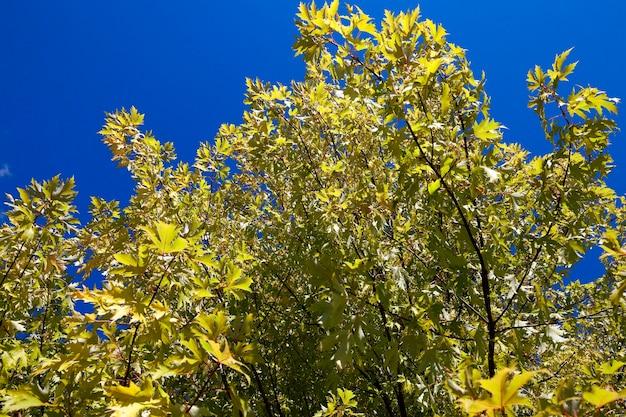 Jesień w parku - jesienią sfotografowane drzewa i liście, lokalizacja - park,
