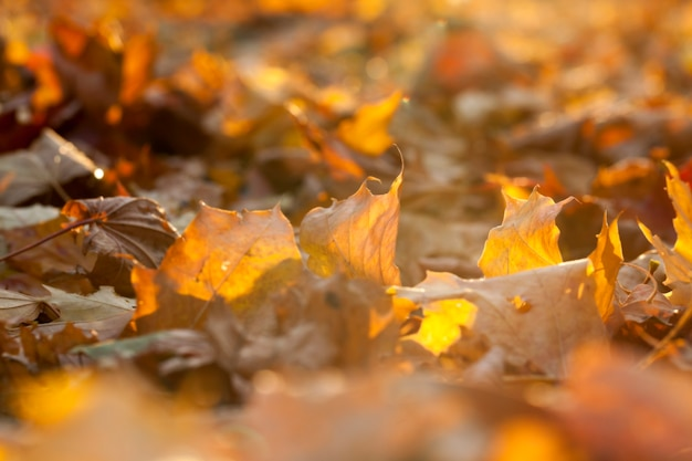 Jesień w parku jesienią sfotografowano drzewa i liście