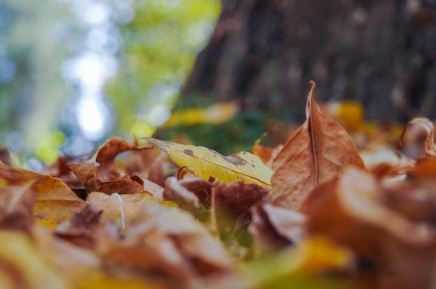 Jesień w parku miejskim