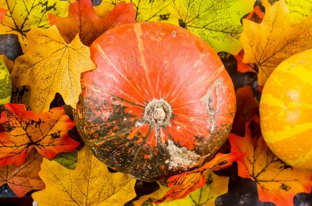 Jesień z dyniami i liśćmi