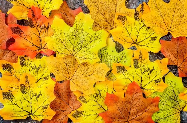 Jesień z kolorowymi jasnymi liśćmi