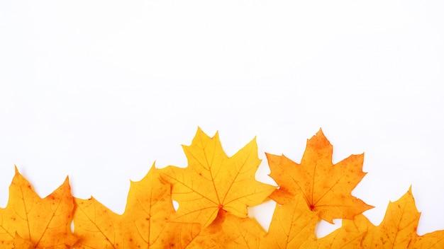 Jesień żółte liście klonu na białym tle, rama jesienny dzień z miejsca kopiowania