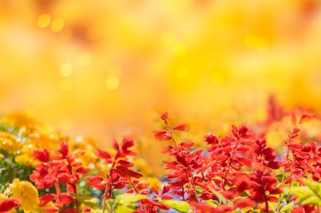 Jesień żółte tło z czerwonymi kwiatami i miejscem na tekst.