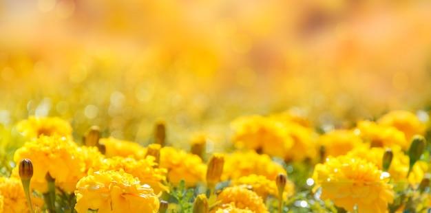 Jesień żółte tło z kwiatami i miejsca na kopię. baner, selektywne skupienie.
