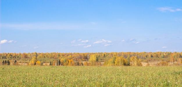 Jesień żółty las i pole. błękitne niebo z chmurami nad lasem. piękno przyrody jesienią.