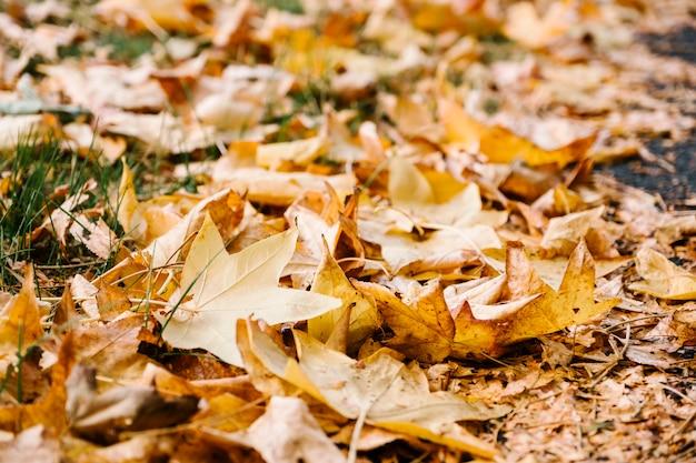 Jesień żółty liść