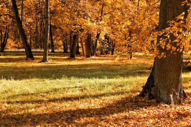 Jesieni drzewa plenerowi w lesie. natura.