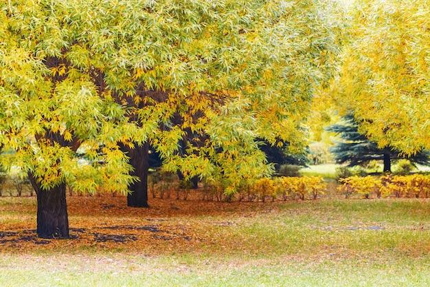 Jesieni drzewa w miasto parku. jesienny krajobraz. spadające liście naturalne tło.