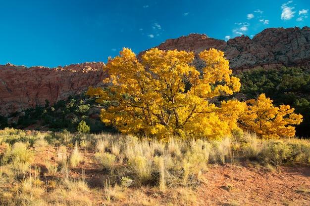 Jesieni drzewo w utah jarze