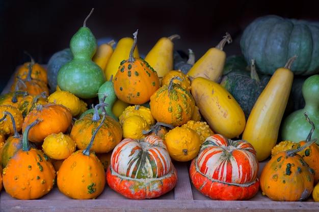 Jesieni dyniowa kolekcja jako halloween tło