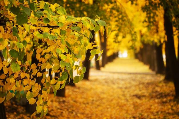 Jesieni natura w miasto parku outdoors