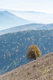 Jesieni natury krajobraz z pojedynczym drzewem na przedpolu