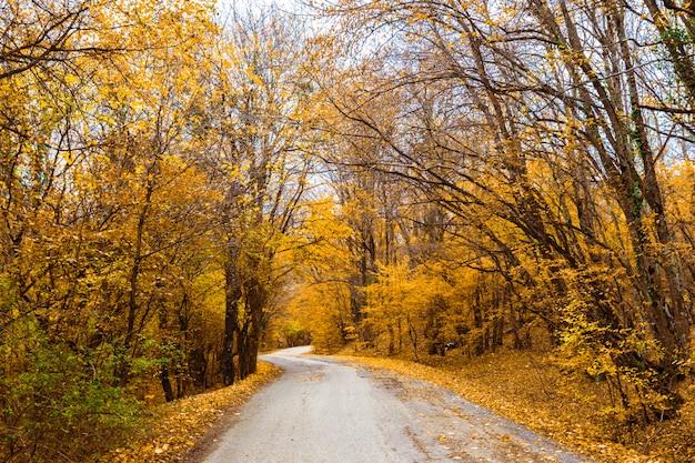 Jesieni natury krajobrazu drzewa w lesie