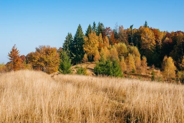 Jesieni parkowy piękny żółty drzewo