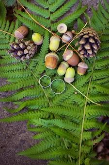 Jesieni tło dla obrączek ślubnych - żołędzie, rożki na liściach paproci