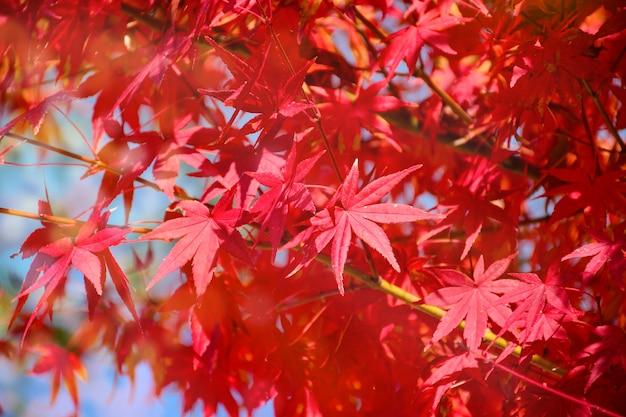 Jesieni tło z ciepłym jesieni słońca światłem.