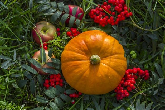Jesieni zbiorów dynia z jagód jarzębiny na zewnątrz. jesienna kompozycja. święto dziękczynienia