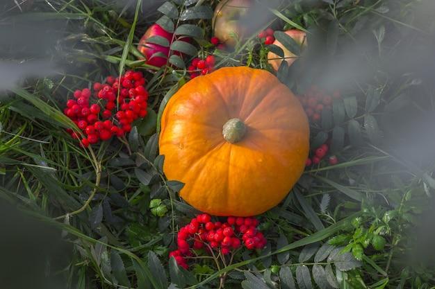 Jesieni zbiorów dynia z jagód jarzębiny na zewnątrz.
