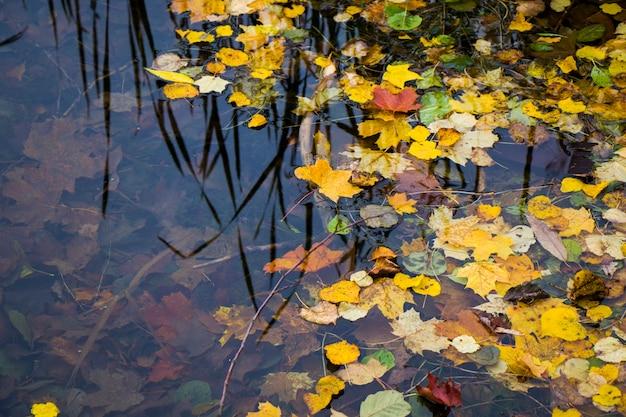 Jesienią i jesienią kolorowe liście w wodzie, cienie i światła, kolory żółty, czerwony, pomarańczowy i zielony na tle przyrody